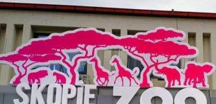 Утрово земјотpecот ги разбуди животните во скопската ЗОО, еве како изгледаше тоа